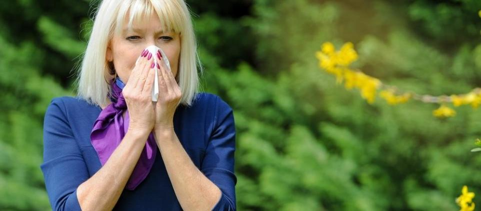 Na czym polega alergiczny nieżyt nosa?
